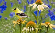 GARDEN SPRUCE UP WITH BIRD SAFETY IN MIND
