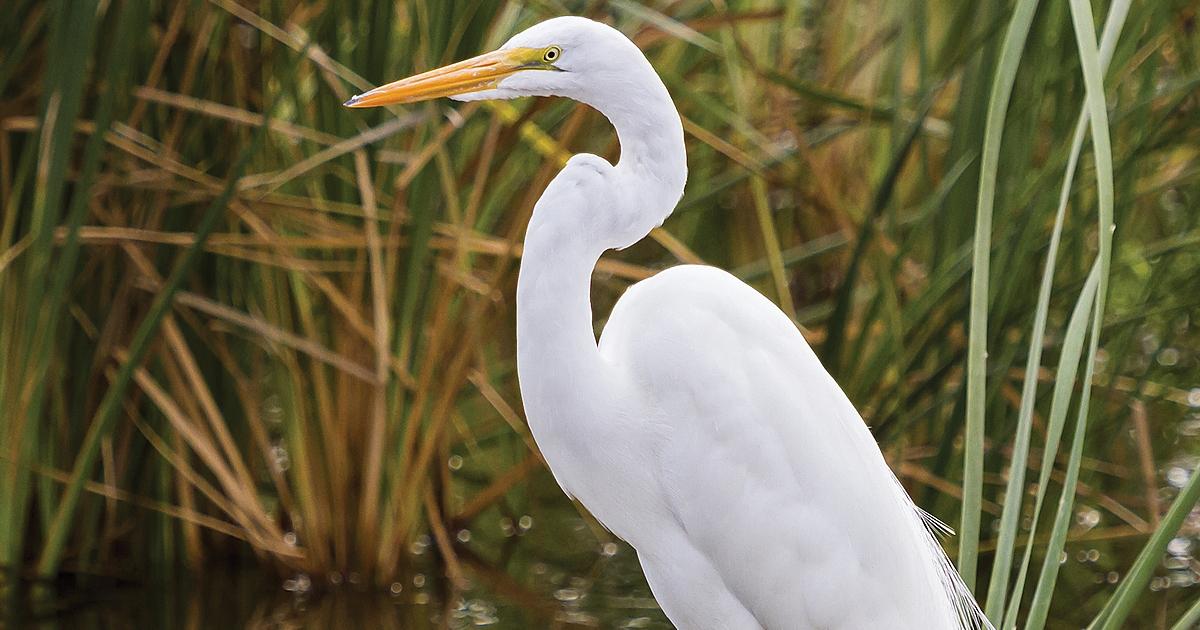 Watching wildlife at South Padre Island, TX
