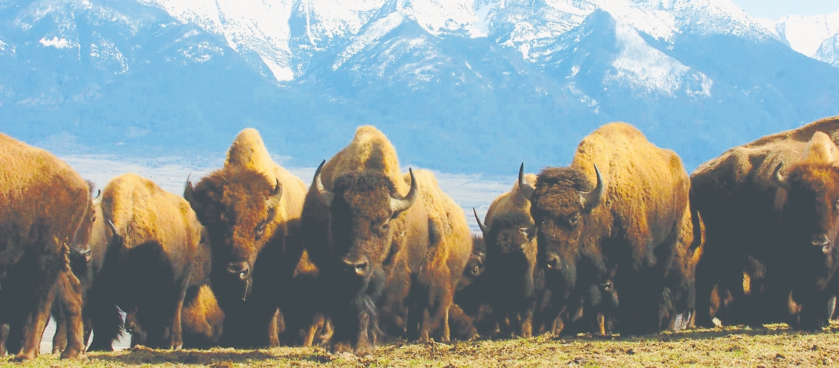 Travel to Montana's National Bison Range