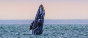 March is Whale Watching Time