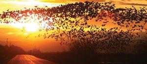 For the Birds: Harney County Bird Festival