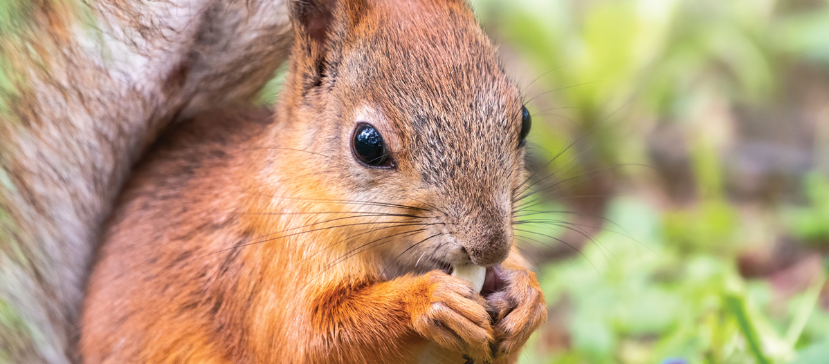 For the Love of Squirrels