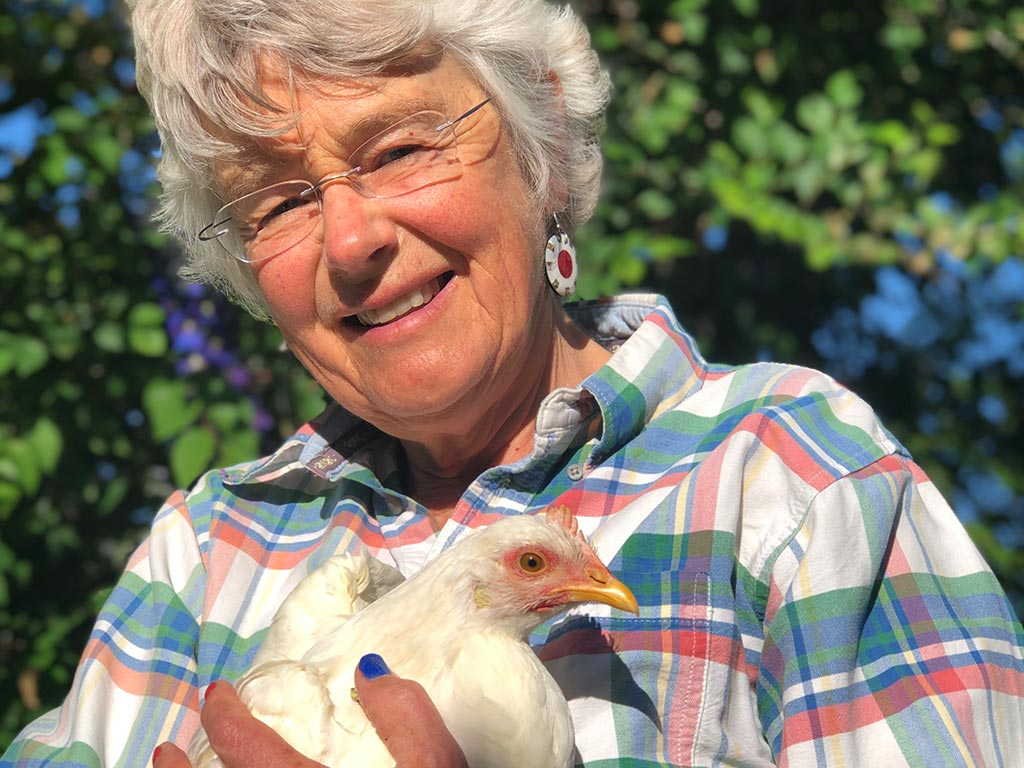 Here Chick, Chick, Chick — The Urban Chicken Craze