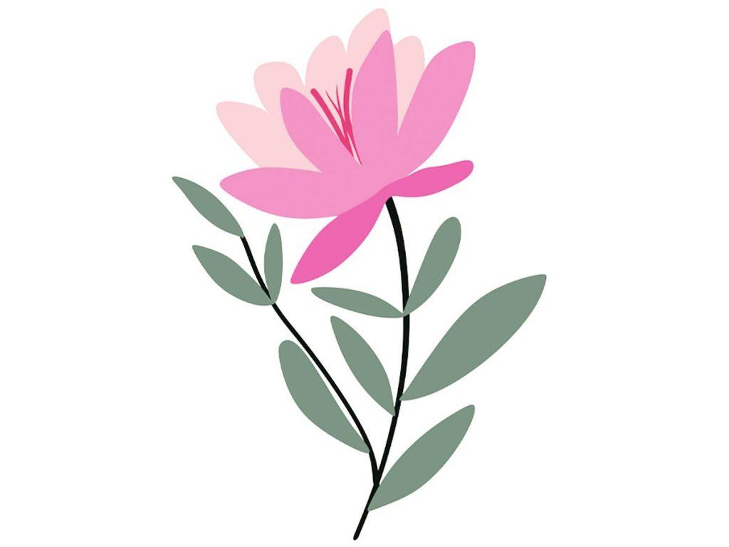 illustration of pink flower